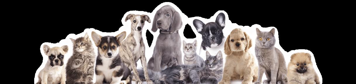 dogs-cats  Arca de Noé